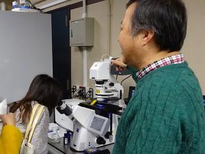 共焦点 レーザースキャン顕微鏡の体験